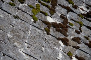 The old gray Eternit roof mossy